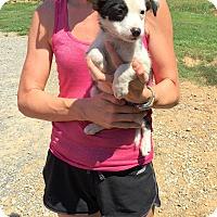 Adopt A Pet :: tallulah - Groton, MA
