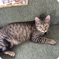 Adopt A Pet :: Coby - Plainville, MA