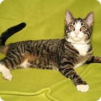 Adopt A Pet :: Maureen - Bradenton, FL