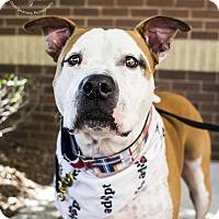 Adopt A Pet :: Jonah - Mooresville, NC
