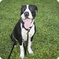 Adopt A Pet :: KOA - West Palm Beach, FL