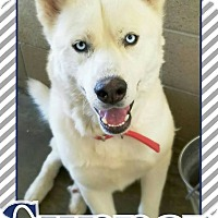 Adopt A Pet :: Gunner - Edwards AFB, CA