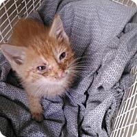 Adopt A Pet :: DALVIN - San Antonio, TX