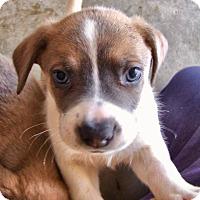 Adopt A Pet :: Olaf - Seabrook, NH