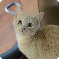 Adopt A Pet :: Truffles 162279 - Atlanta, GA