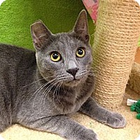 Adopt A Pet :: Wyatt - Foothill Ranch, CA