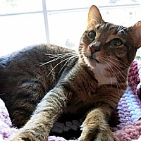 Adopt A Pet :: Egypt - Mission, BC