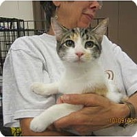 Adopt A Pet :: Miley - Sterling Hgts, MI