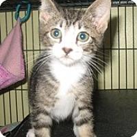 Adopt A Pet :: Bigara - Shelton, WA