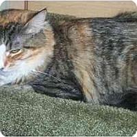 Adopt A Pet :: Eva - Newburgh, NY