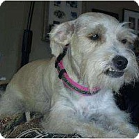 Adopt A Pet :: Trixie - Oceanside, CA