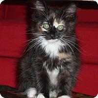Adopt A Pet :: Georgina - Portland, OR