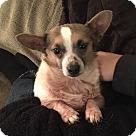 Adopt A Pet :: BooBoo