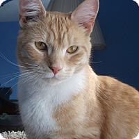 Adopt A Pet :: Lennon - Colmar, PA