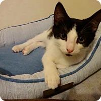 Adopt A Pet :: Doublestuff - Colmar, PA