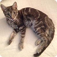 Adopt A Pet :: Stretch - Brooklyn, NY