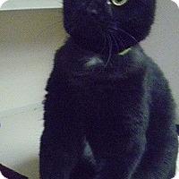 Adopt A Pet :: Doc - Hamburg, NY