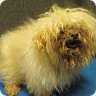 Adopt A Pet :: *DEACON