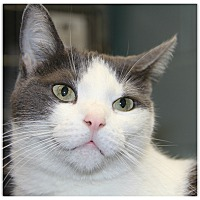 Adopt A Pet :: Ms. Congeniality - Forked River, NJ