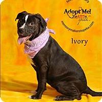 Adopt A Pet :: Ivory - Topeka, KS