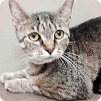 Adopt A Pet :: Angie - Plainfield, IL
