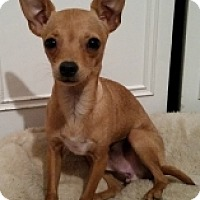 Adopt A Pet :: Screech - Mesa, AZ