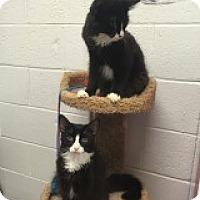 Adopt A Pet :: Dante - Manchester, CT