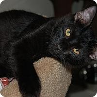 Adopt A Pet :: Ace - McCormick, SC
