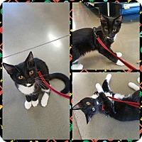 Adopt A Pet :: Ben - Ringgold, GA