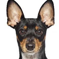 Adopt A Pet :: Apollo - Oakland Park, FL