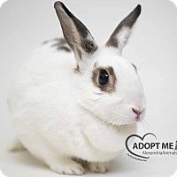 Adopt A Pet :: Calix - Alexandria, VA