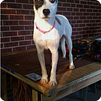 Adopt A Pet :: Marcella - Thomasville, NC