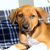 Adopt A Pet :: Lady Goo Goo - Los Angeles, CA