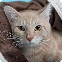 Adopt A Pet :: Javi - Wilmington, DE