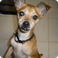 Adopt A Pet :: Benny - West Springfield, MA