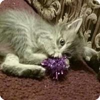 Adopt A Pet :: Ash - Orlando, FL