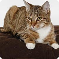 Adopt A Pet :: ZIPPY - Gloucester, VA