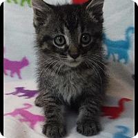 Adopt A Pet :: Cash - Batesville, AR