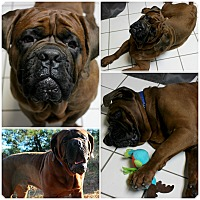 Adopt A Pet :: Angus - Forked River, NJ