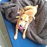 Adopt A Pet :: A272110 Maxine - San Antonio, TX