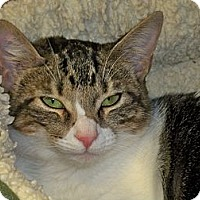 Adopt A Pet :: Medela - Secaucus, NJ