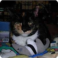 Adopt A Pet :: Shannon & Cali - Riverside, RI