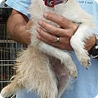 Adopt A Pet :: Wendy - Long Beach, CA