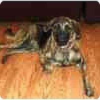 Adopt A Pet :: Gretchen - Harrisburg, PA