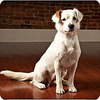 Adopt A Pet :: Snuggles - Owensboro, KY