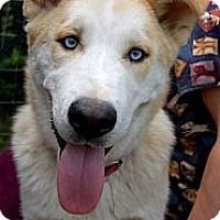 Adopt A Pet :: Milo - Brattleboro, VT