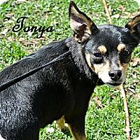 Adopt A Pet :: Tonya - Vancleave, MS