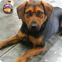 Adopt A Pet :: Ruger - Albert Lea, MN