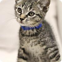 Adopt A Pet :: Sigmund - Sacramento, CA