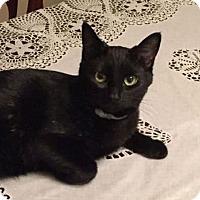 Adopt A Pet :: Cinder - Berkeley, CA
